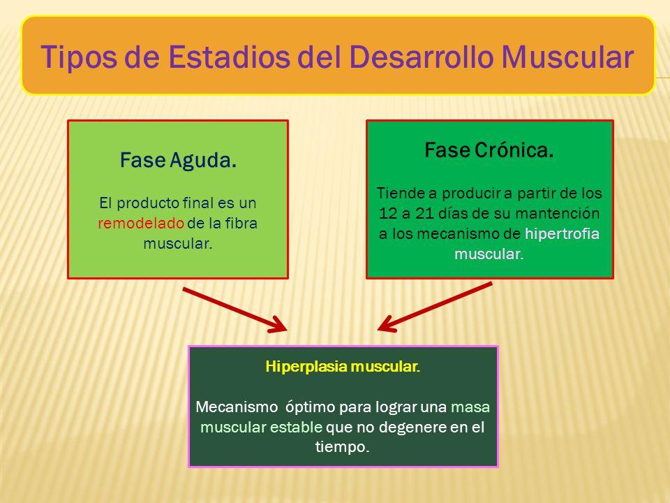 Tipos+de+Estadios+del+Desarrollo+Muscular