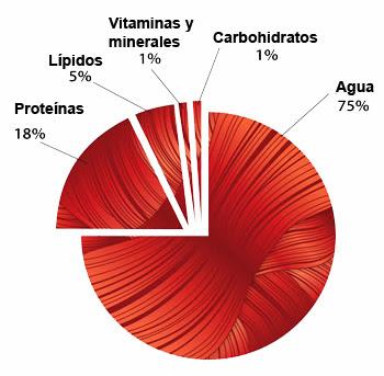 composición química músculo